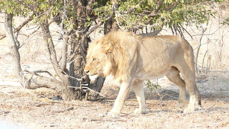 Namibie Août 2016 P1110125