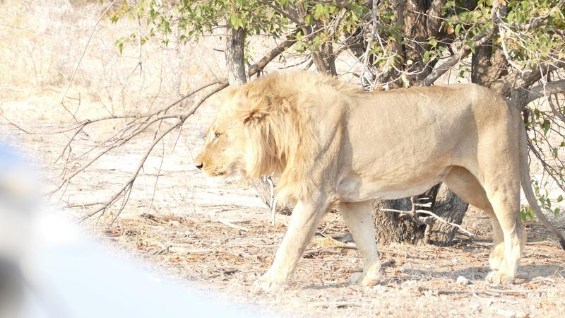 Namibie Août 2016 P1110127