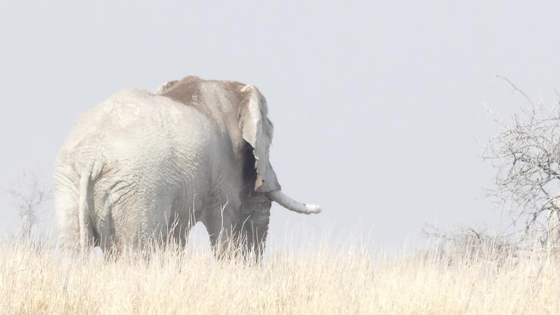 Namibie Août 2016 P1110128