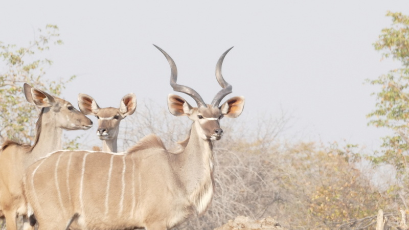 Namibie Août 2016 P1110129