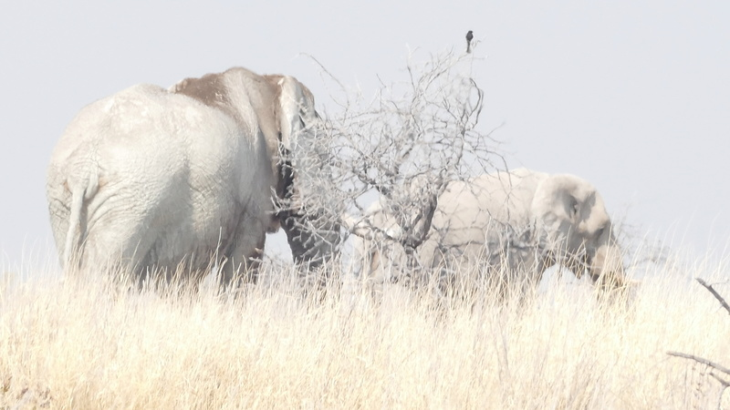 Namibie Août 2016 P1110130