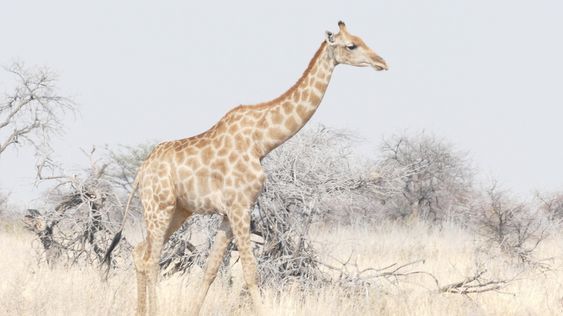 Namibie Août 2016 P1110132