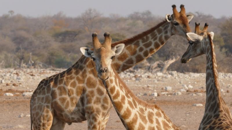 Namibie Août 2016 P1110133