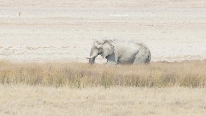 Namibie Août 2016 P1110210