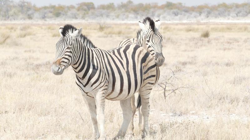 Namibie Août 2016 P1110211