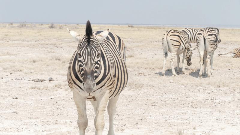 Namibie Août 2016 P1110214