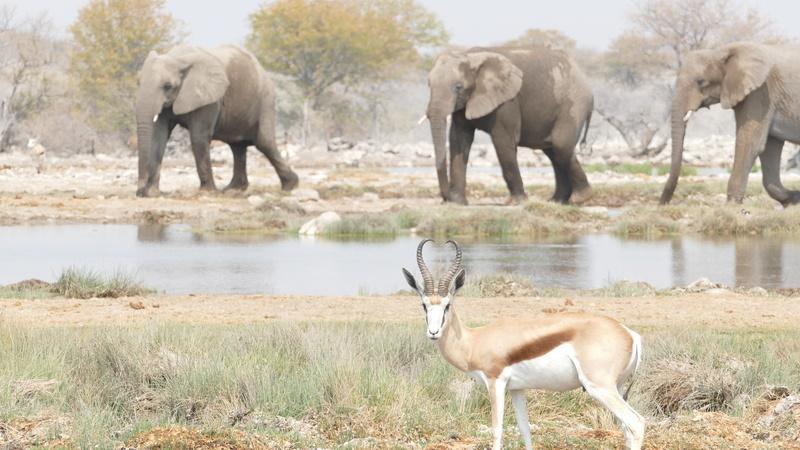 Namibie Août 2016 P1110216