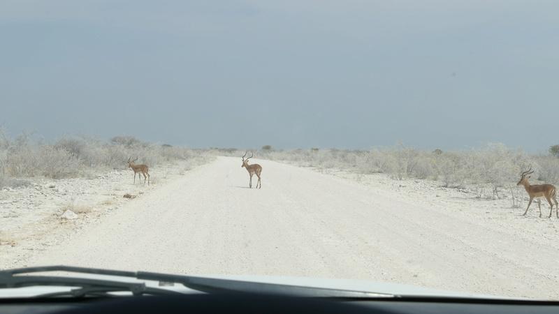 Namibie Août 2016 P1110217