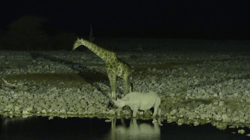 Namibie Août 2016 P1110313