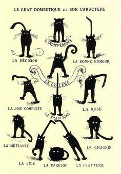 Poésie et textes Les chats et l' automne - Page 2 C445f910