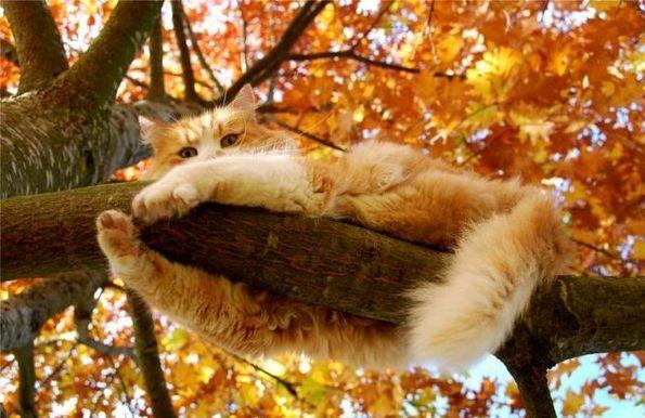 Poésie et textes Les chats et l' automne Funnie10