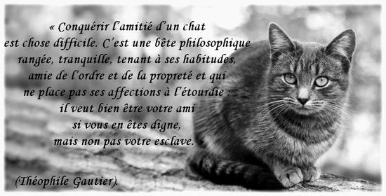 Poésie et textes Les chats et l' automne - Page 2 Jfx5ts12
