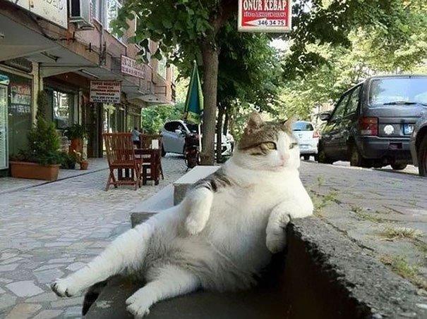 Les chats peuvent aussi faire l'Histoire : 1_love10