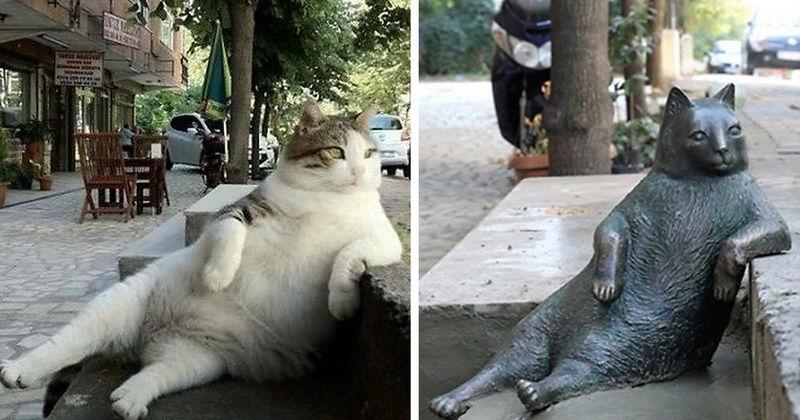 Les chats peuvent aussi faire l'Histoire : Laid-b10