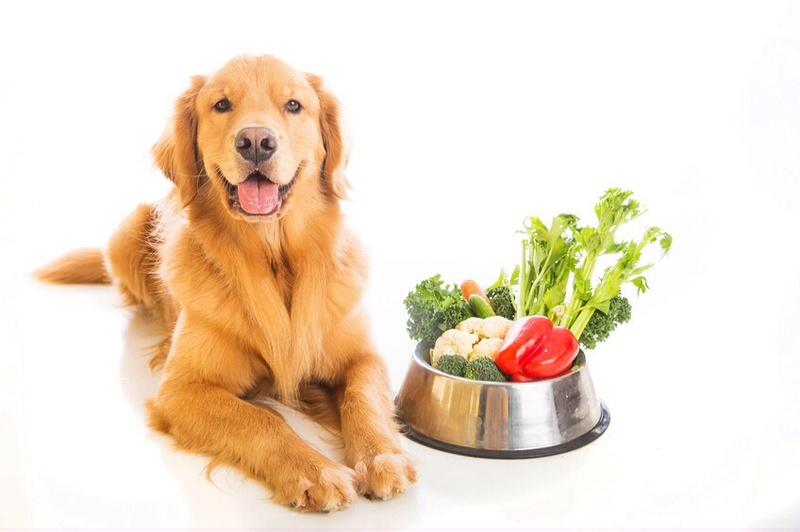Les aliments les plus sains pour votre chien Image11