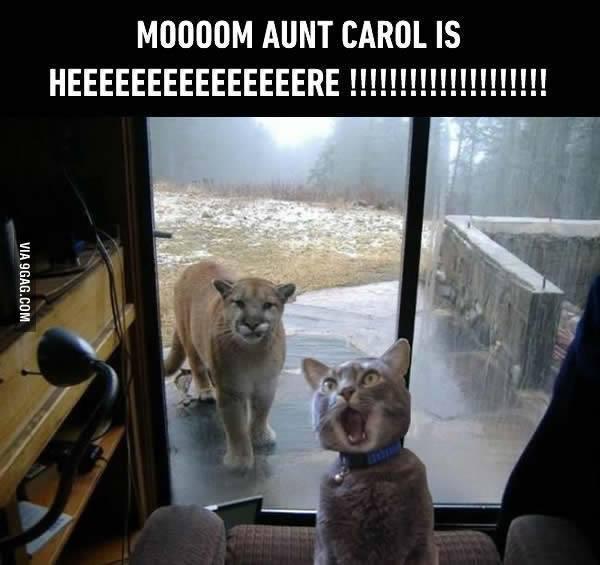 Zavez des chats ?? Mom10