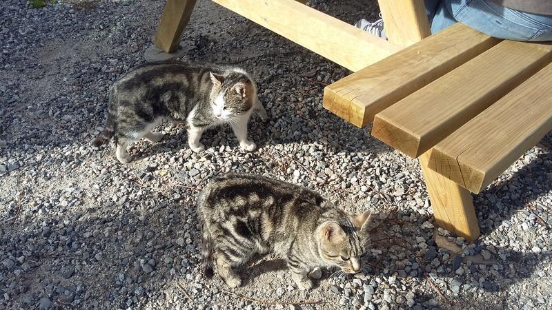 Des chats par milliards !!! 20151111