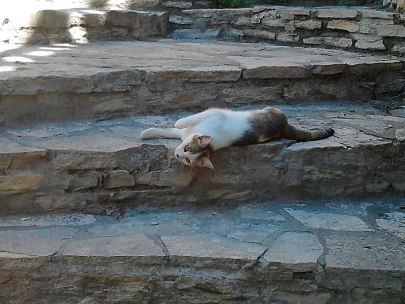 Des chats par milliards !!! Photo010