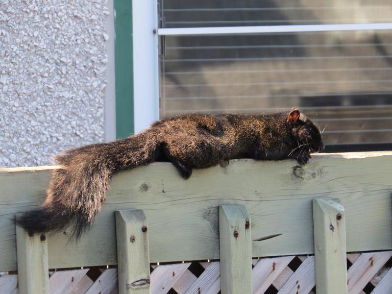Sieste sous le chaud soleil Img_4411