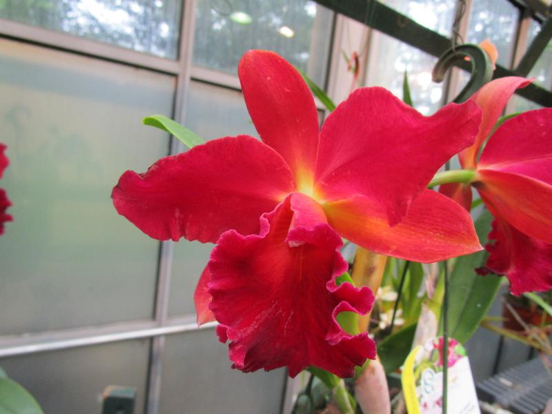 Orchideenausstellung in Frankfurt im Palmengarten 2016 - Seite 2 Img_0651