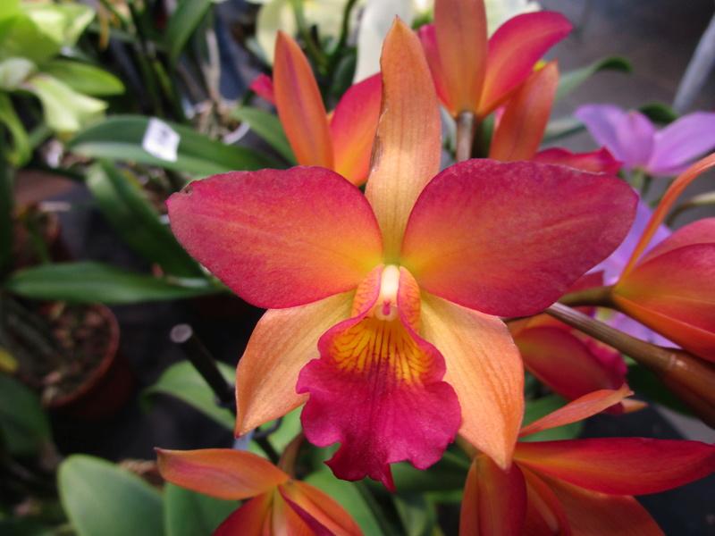 Orchideenausstellung in Frankfurt im Palmengarten 2016 - Seite 2 Img_0652