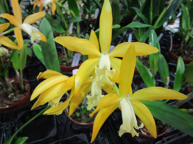 Orchideenausstellung in Frankfurt im Palmengarten 2016 - Seite 2 Img_0656