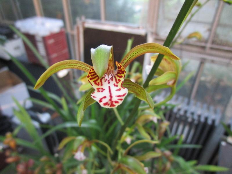 Orchideenausstellung in Frankfurt im Palmengarten 2016 - Seite 2 Img_0670
