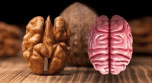 8 aliments qui soignent les organes auxquels ils ressemblent 2016-110