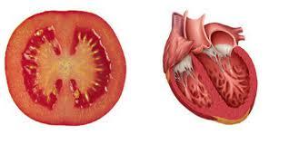 8 aliments qui soignent les organes auxquels ils ressemblent 2016-111