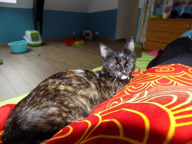 Lilo, Femelle européenne (01/01/2015) Dscn6537