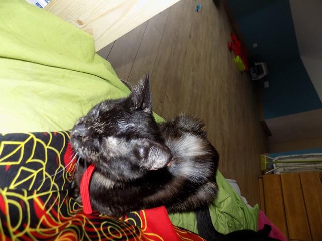 Lilo, Femelle européenne (01/01/2015) Dscn6538