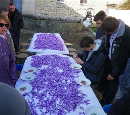 Fête du safran à Broué (28) Safran12