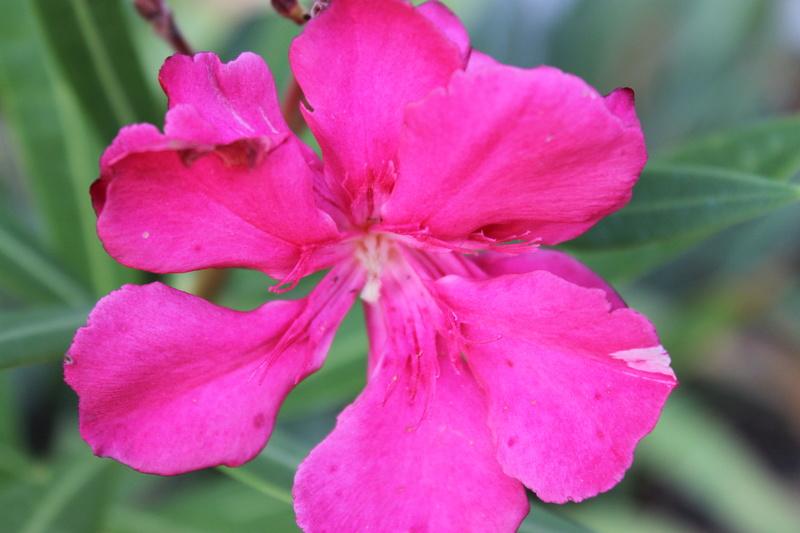 Floraisons du mois de septembre - Page 11 Img_3919