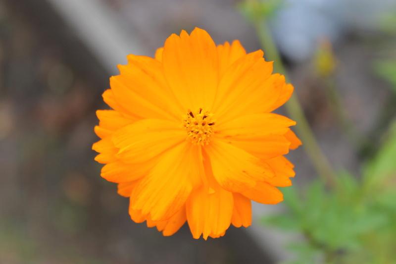 floraisons d'octobre - Page 14 Img_4024