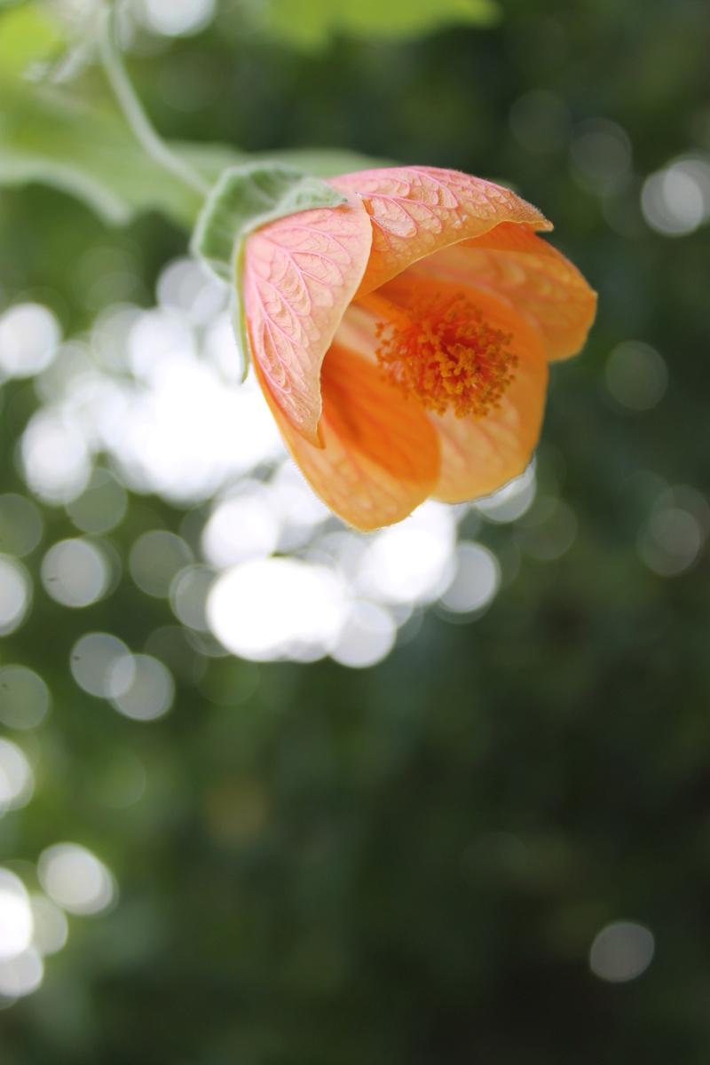 floraisons d'octobre - Page 14 Img_4027