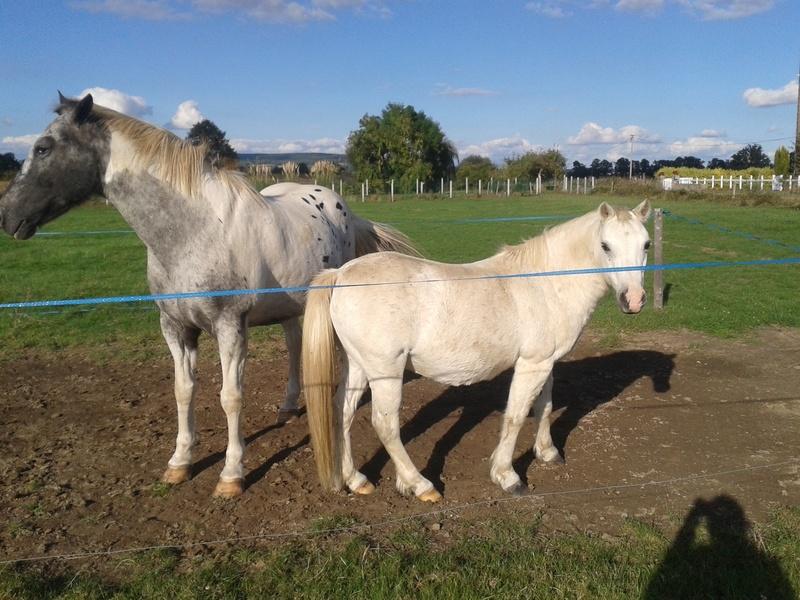 FRIPON - Welsh Pony né en 1993 - adopté en juillet 2015 par Claire 20161010