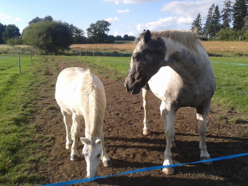 FRIPON - Welsh Pony né en 1993 - adopté en juillet 2015 par Claire 20161011