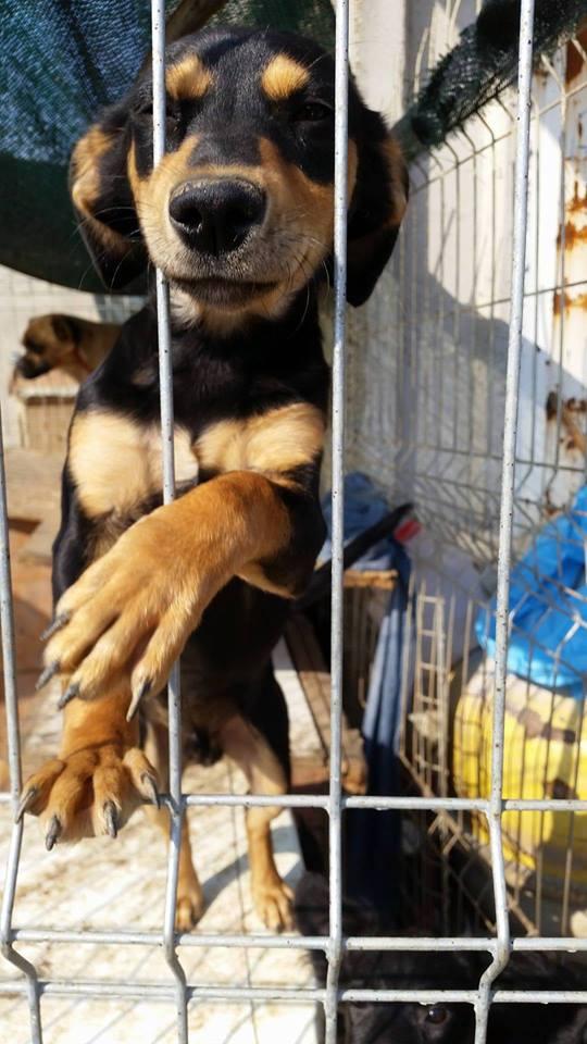 FLINTEA , né en 2016 - (Alina) - Adopté via l'association Rev'Animal Flinte11