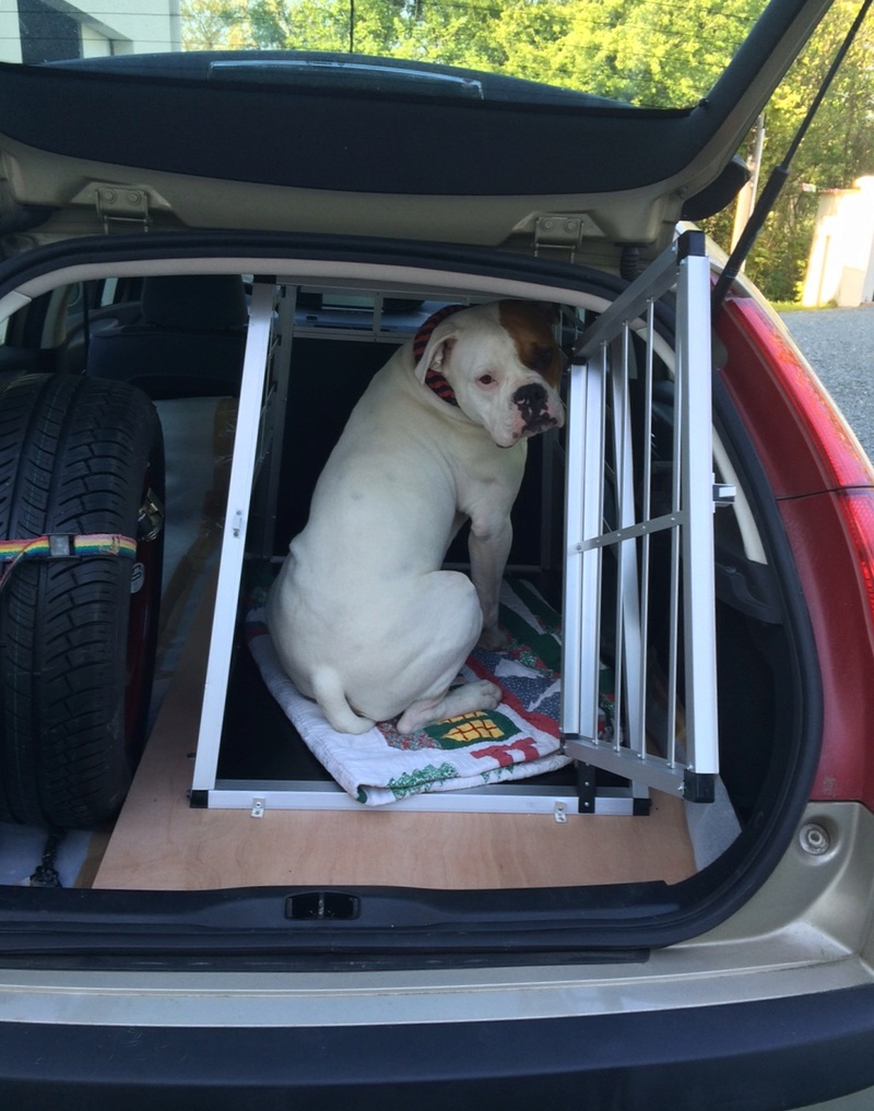 Transport en voiture des chiens et chats - Page 8 Image74