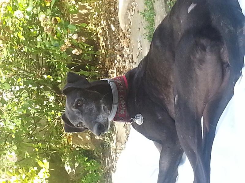 Raul ( Moro) galgo noir Adopté - Page 3 20160711