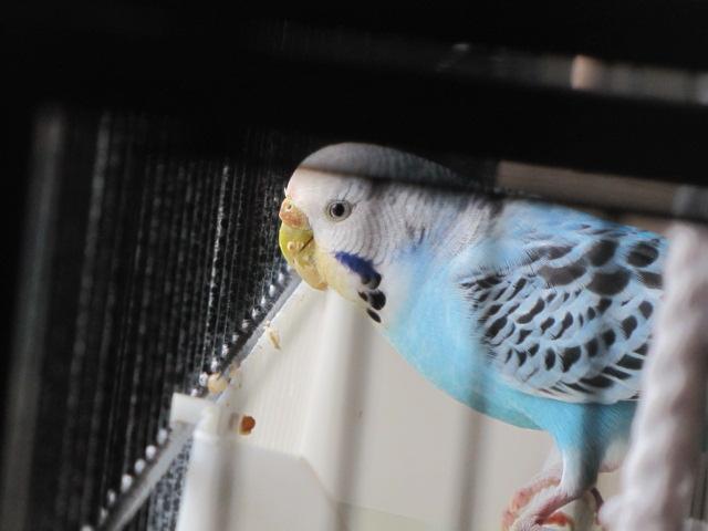 grisette et bluee Img_9915