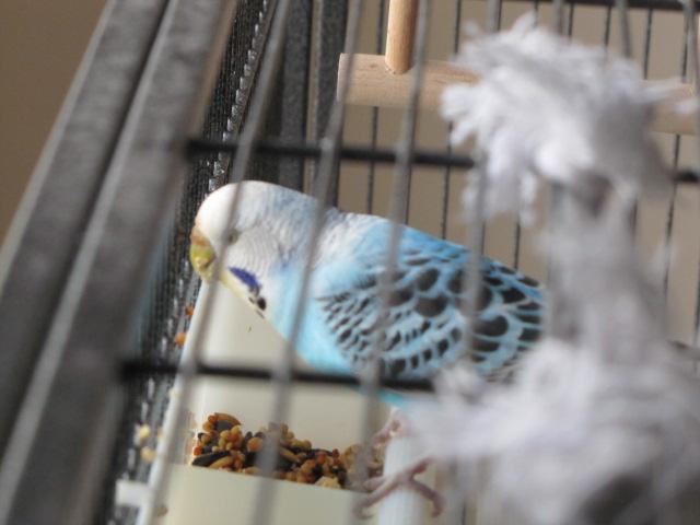 grisette et bluee Img_9916