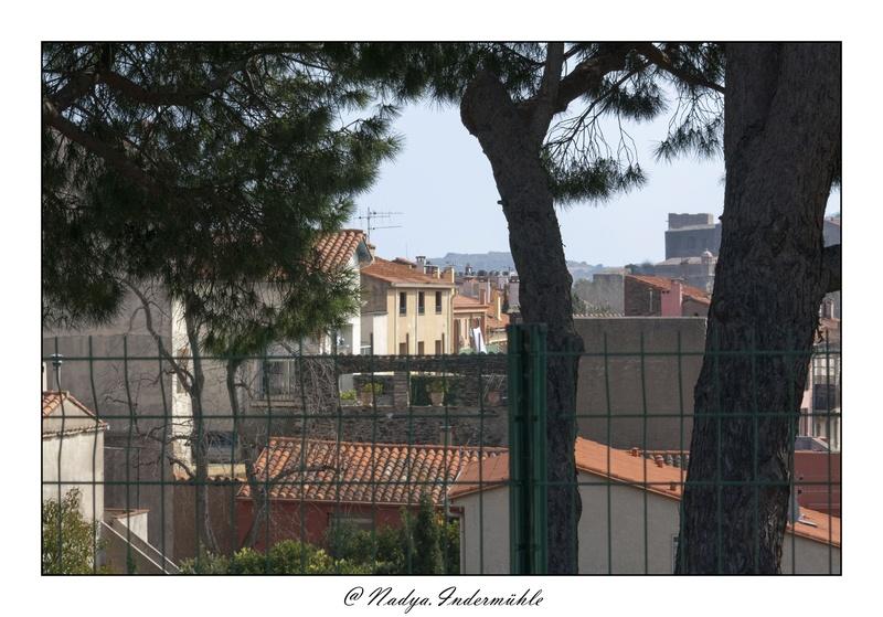 Collioure, petit coin de paradis Cadr2011