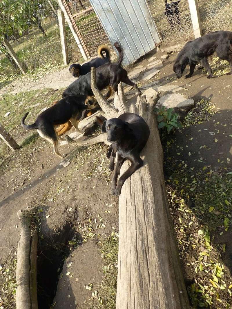 kira - KIRA F-X, moyenne, env. 16 kg, née 2011 (BACKA) - En cours adoption par Audrey B. (Départ78) Kira310