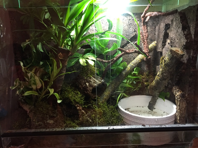 Terrarium Kassina maculata  Img_0412