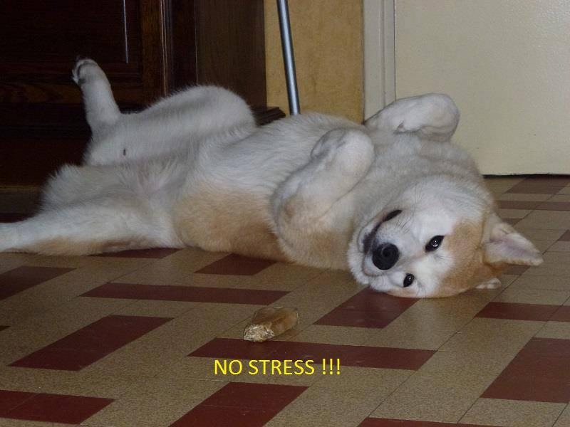 Photos de vous et vos chiens en pleine activité (course, vtt,ring, ..) 11064610