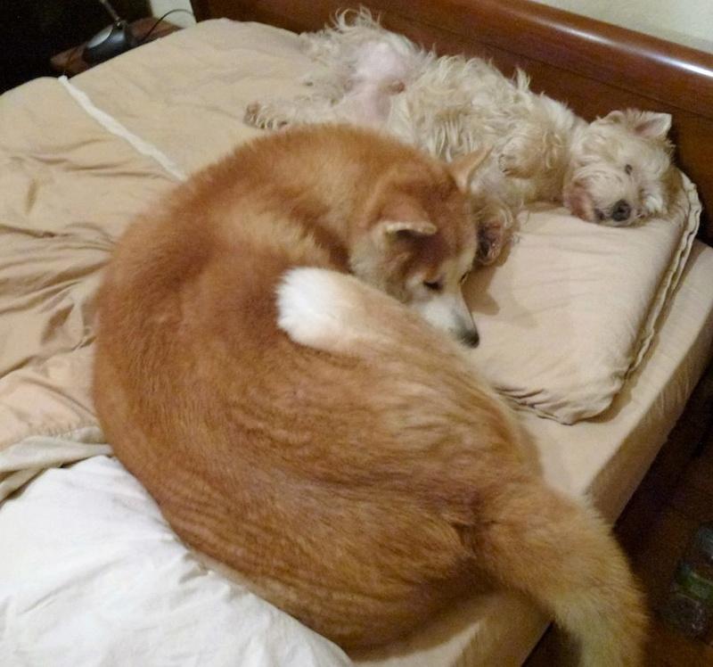 Photos de vous et vos chiens en pleine activité (course, vtt,ring, ..) 12509611