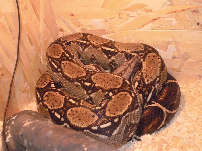 Mes serpents  Dscn3513