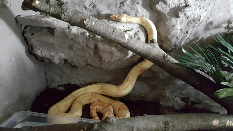 Mes serpents  Po210
