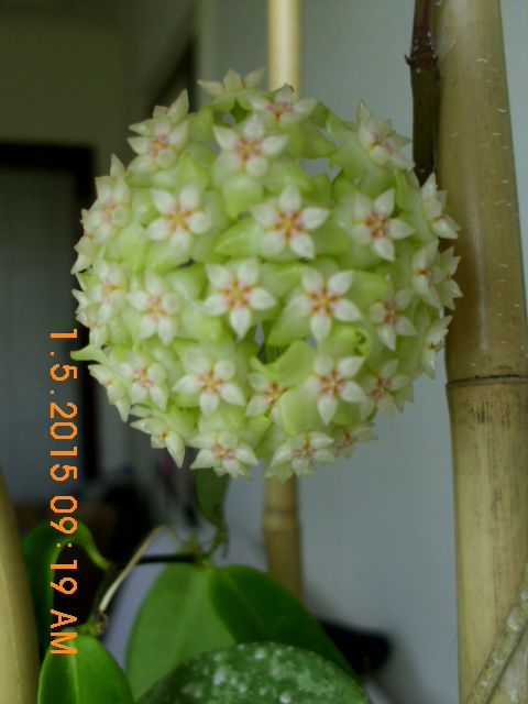 Blüten 2016 - Seite 8 Dsci6010